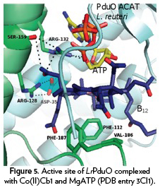 Figure 5. Active site of LrPduO complexed with Co(II)Cb1 and MgATP (PDB entry 3Cl1).