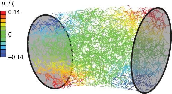 Fiber network model