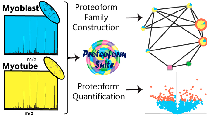 Illustration for Proteoforms